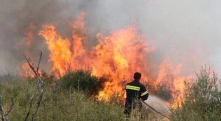 Πυρκαγιά καίει χαμηλή βλάστηση στη Φυλή