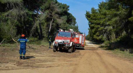 Καλάβρυτα: Πυρκαγιά σε δασική έκταση