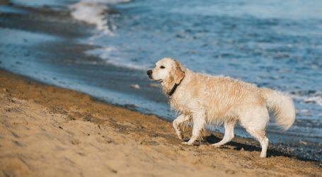 Επιτρέπονται τα σκυλιά στις παραλίες;