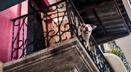 Βόλος: Έκλεισε τον σκύλο της στο μπαλκόνι με 35 βαθμούς Κελσίου – Συνελήφθη η ιδιοκτήτρια