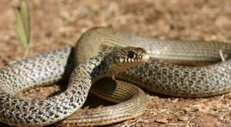 Λάρισα: Έτρεχε στον Πηνειό και εμφανίστηκε μπροστά του φίδι…