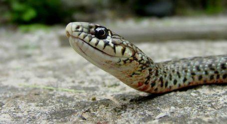 Πυροσβέστες απομάκρυναν φίδια από πολυκατοικίες του Βόλου