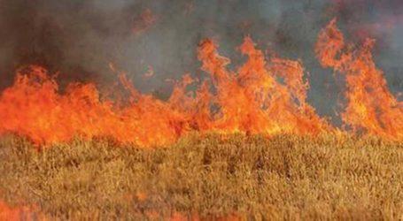 Πυρκαγιά ξέσπασε στο Μικρό Βουνό – Ολοκληρώθηκε η κατάσβεσή της