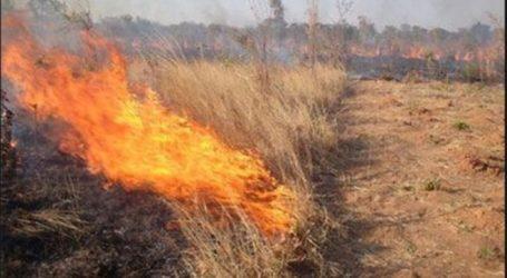 Βατερλό για δεκάδες αγρότες στη Λάρισα: Χάνουν τις επιδοτήσεις επειδή έκαψαν καλαμιές χωρίς άδεια!