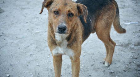 Δηλητηρίασαν σκυλιά σε οικισμό έξω από τον Βόλο – Σοκ για κατοίκους και ιδιοκτήτες