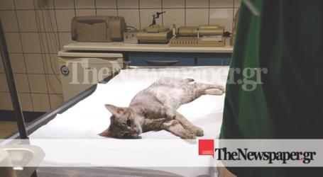 Φρίκη στον Βόλο – Βίασαν και βασσάνισαν γατάκι [προσοχή σκληρές εικόνες]
