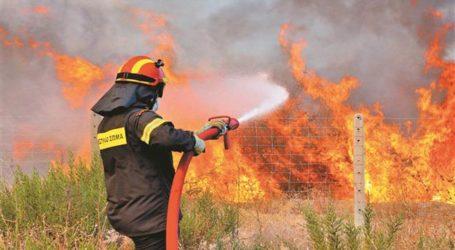 Λάρισα: Μεγάλη ζημιά από πυρκαγιά σε κτηνοτροφική μονάδα  – Κάηκαν ζωντανά 300 ζώα