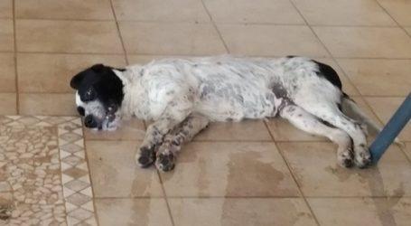 Μαζική θανάτωση σκύλων στον Μώλο Φθιώτιδας