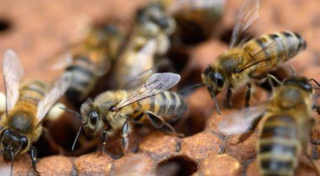 Σε κρίσιμη κατάσταση 70χρονος που δέχτηκε επίθεση από χιλιάδες μέλισσες