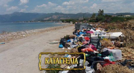 Επικίνδυνη η κατάσταση με τα σκουπίδια στο Αλεποχώρι Μεγάρων