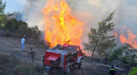 Φωτιά σε εξέλιξη στην περιοχή Δαφνούλα της Ηλείας