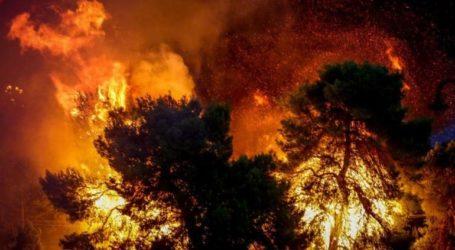 Πυρκαγιά στην Αμφίκλεια Φθιώτιδας – Εκκενώθηκαν προληπτικά δύο κατασκηνώσεις