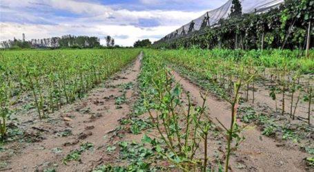 Μεγάλες καταστροφές σε καλλιέργειες στην Ημαθία από τα ακραία καιρικά φαινόμενα