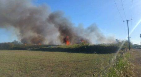 Υπό έλεγχο η πυρκαγιά σε αγροτική έκταση κοντά στο αεροδρόμιο