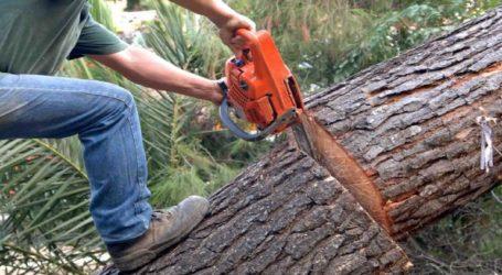 Κοπές δέντρων, λόγω επικινδυνότητας, στην πεδιάδα της Αλεξάνδρειας
