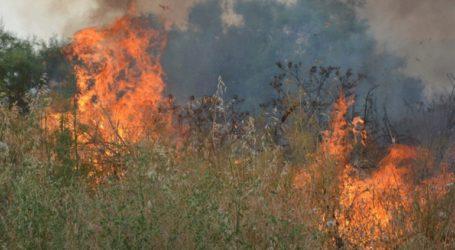 Τρία πύρινα μέτωπα καίνε δασικές εκτάσεις στην Εύβοια