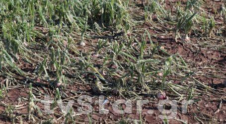 Ελπίδα μόνο οι αποζημιώσεις για τους αγρότες σε Λουτουφί και Νεοχωράκι