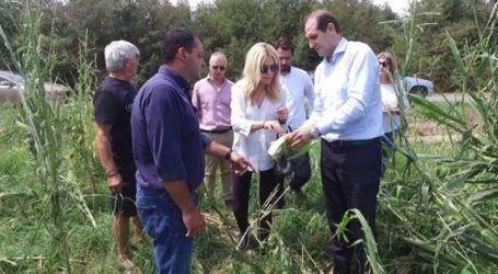 Στις πληγείσες από την κακοκαιρία αγροτικές περιοχές Ημαθίας και Χαλκιδικής η Φ. Αραμπατζή