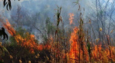 Υπό μερικό έλεγχο η φωτιά στην περιοχή Νησέλια