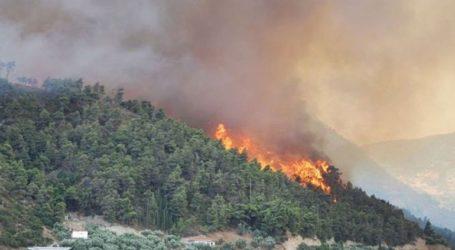 Σε εξέλιξη πυρκαγιά στη Μεγαλόπολη
