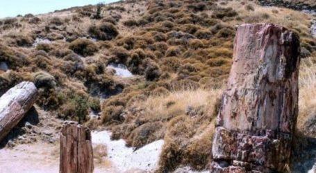 Εντολή αυτεπάγγελτης έρευνας με αφορμή την κλοπή πετρωμάτων από το Απολιθωμένο ∆άσος της Μυτιλήνης