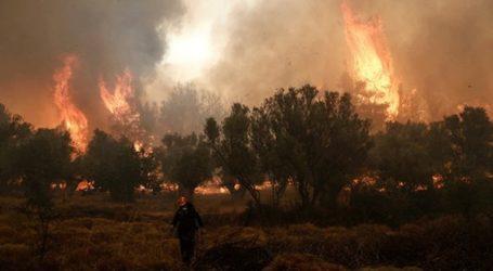 Υπό πλήρη έλεγχο η πυρκαγιά σε δασική έκταση στην Ξάνθη
