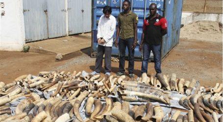 Κατάσχεση ρεκόρ στη χώρα με 8,8 τόνους ελεφαντόδοντου