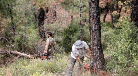 Νεκρός άνδρας από πτώση δέντρου κατά την εκτέλεση εργασιών υλοτόμησης