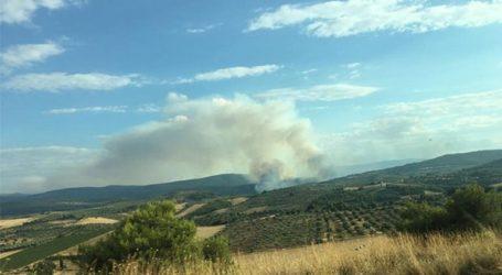 Σε ύφεση η πυρκαγιά στην Τανάγρα
