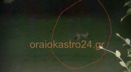 Αλεπού… επισκέπτεται σπίτι στο Ωραιόκαστρο