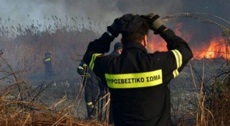 Πυρκαγιά σε εξέλιξη στον Ωρωπό