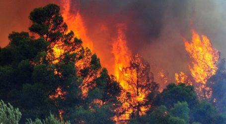 Υψηλός προβλέπεται ο κίνδυνος πυρκαγιάς για σήμερα στη Μαγνησία [χάρτης]