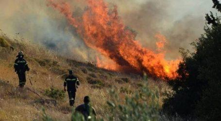 ΤΩΡΑ: Φωτιά σε δασική έκταση στο Πήλιο