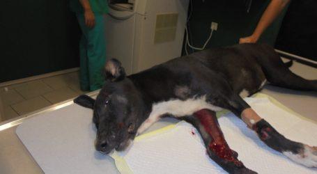 Βόλος: Χτύπησε σκύλο με το αυτοκίνητό της και εξαφανίστηκε…