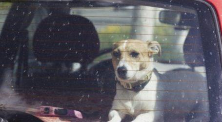 Οργή για 47χρονο στη Μαγνησία – Άφησε τον σκύλο του να πεθάνει στη ζέστη του αυτοκινήτου