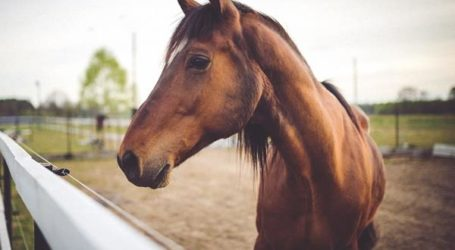 Βόλος: Είχε παρατήσει το άλογό του με σπασμένο πόδι σε χωράφι – Εισαγγελική παρέμβαση