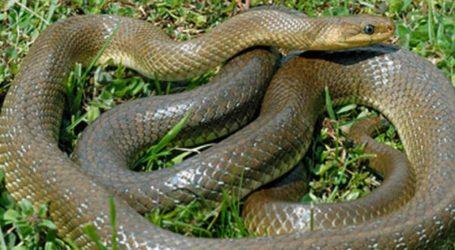 Φίδι αναστάτωσε οικογένεια στον Βόλο – Το απομάκρυνε η Πυροσβεστική