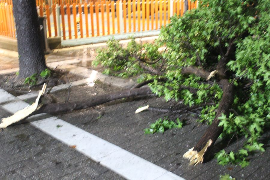 Έπεσε δέντρο στην πλατεία Ταχυδρομείου στη Λάρισα – Από θαύμα δεν τραυματίστηκε κόσμος (φωτο)