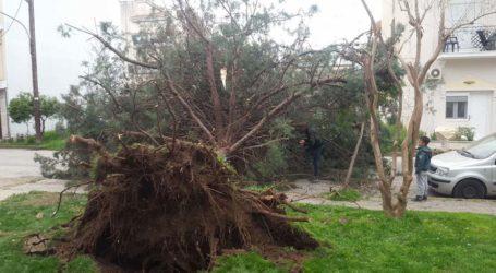 Κόπηκε δέντρο λόγω ισχυρών ανέμων στα Μεσάγγαλα