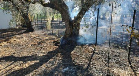 Πυρκαγιά σε ελαιοπερίβολο στον Μάραθο