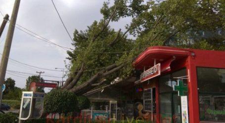 Δέντρο έπεσε πάνω σε καταστήματα δίπλα στο νοσοκομείο Καρδίτσας (Φώτο – Βίντεο)