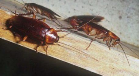 Επιδρομή… κατσαρίδων κάνει τους Λαρισαίους να αναστενάζουν – Τι λέει η ΔΕΥΑΛ