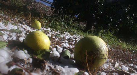 Εκτίμηση ζημιών για τη Λάρισα στη φυτική παραγωγή εξαιτίας των πρόσφατων ακραίων καιρικών φαινομένων