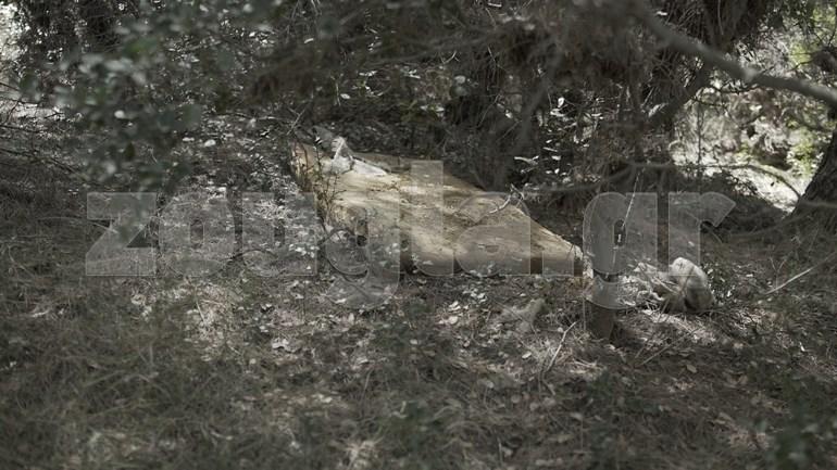Τι γυρεύει ένα στρώμα κρεβατιού μέσα στο δάσος;