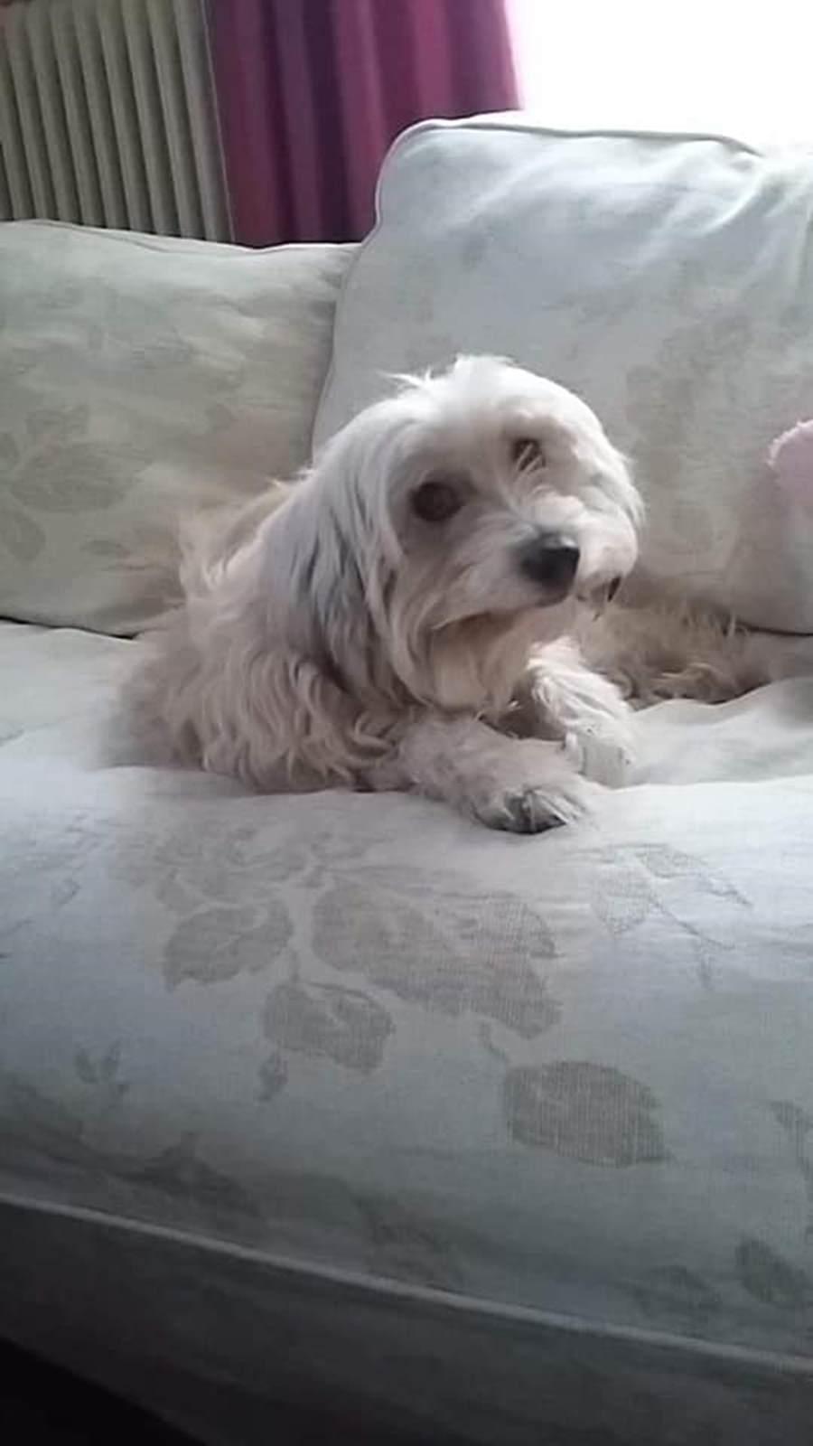 Λαρισαία έχασε την σκυλίτσα της στον Πλαταμώνα και ζητάει βοήθεια για την ανεύρεσή της (φωτο)