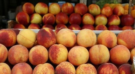 Δέσμευση 1.557 κιλών φρούτων στον Πειραιά