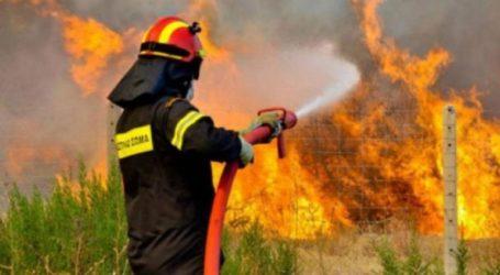Πυρκαγιά στο Κουτσοπόδι Αργολίδας