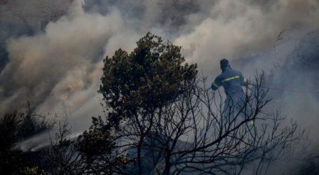 Υπό μερικό έλεγχο η πυρκαγιά στην περιοχή των Φαρσάλων