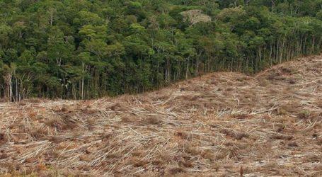 Η αποψίλωση των δασών σχεδόν τετραπλασιάστηκε τον Ιούλιο σε ετήσια βάση