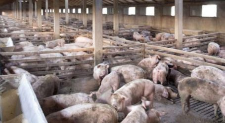 Η εξάπλωση της αφρικανικής πανώλης των χοίρων στη Βουλγαρία είναι «ανησυχητική»